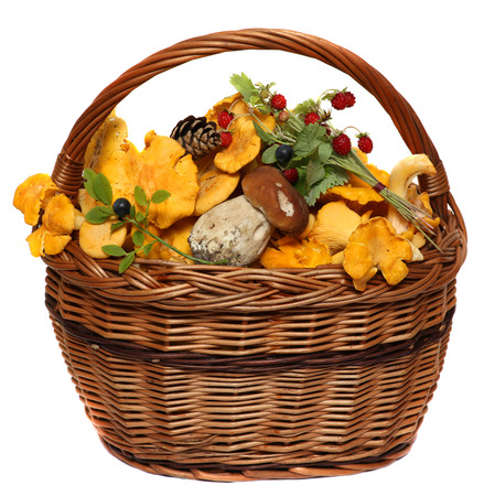 fungous: Basket with wild forest mushrooms and berries isolated on a white background.