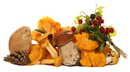 fungous: Mushrooms, berries, pine cones, strawberries and blueberries isolated on white background. The gifts of the forest.