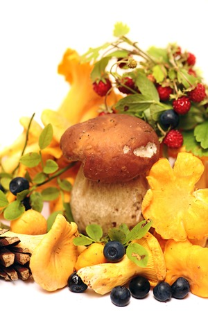 fungous: Little mushroom,  other forest mushrooms and berries of  bilberry ,  wild strawberry.