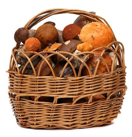fungous: Basket of wild mushrooms isolated on white background. Wild Foraged Mushroom selection