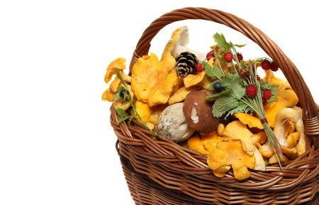 fungous: basket of forest mushrooms and berries isolated on a white background.