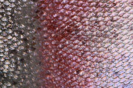escamas de peces: Escamas de peces de cerca. escamas de los peces de fondo Foto de archivo