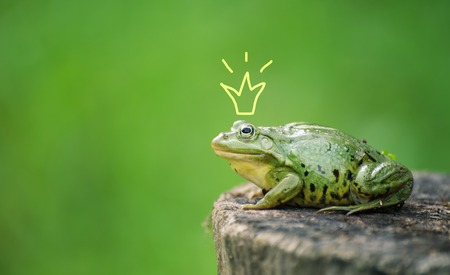 Cute frog princess or prince. Toad painted crown, shooting outdoor. Stock Photo