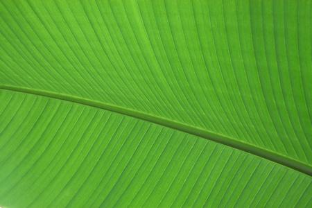 green leaf plant close up.