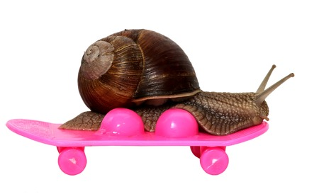 Speedy snail like car racer. Concept of speed and success. Wheels are blur because of moving. Grape Snail riding on a skateboard, isolated on white background.