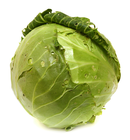head of Cabbage Isolated on White Background. Stock Photo