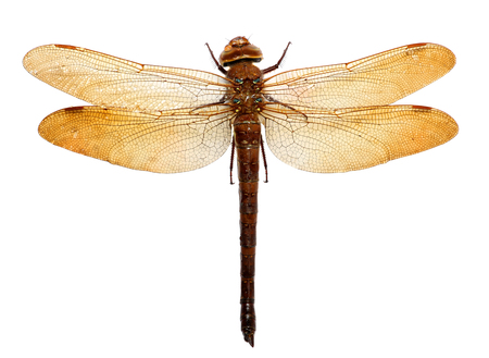 dragonfly isolated on white background 写真素材