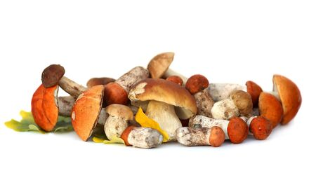 Wild Foraged Mushroom selection isolated on white background, with shadow. Boletus Edulis mushrooms
