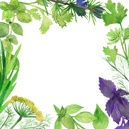 Watercolor frame of spicy plants. Green condiments isolated on white background. Spicy herbs: Basil, coriander, rosemary, parsley, fennel, dill, marjoram, for beautiful design, with space for text.