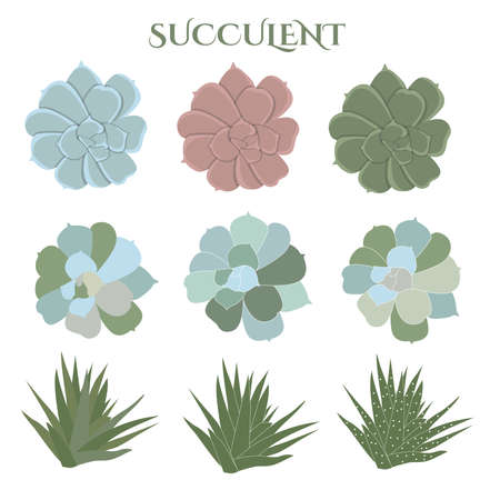 Set of color succulent, hand drawn cactus, floral elements, vector illustration, isolated on white background