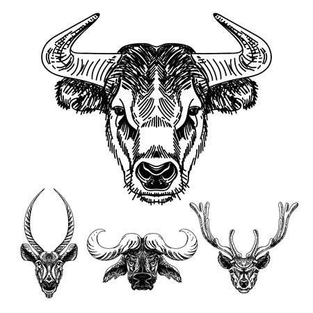 bull horn: Vector set of hand drawn animal. Vintage illustration with Bulls and deer heads.