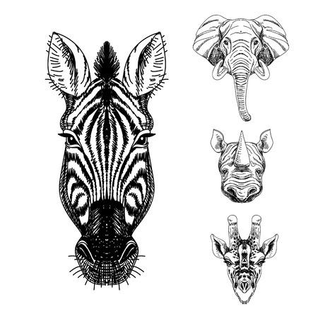 손으로 그린 동물의 집합입니다. 코끼리, 기린, 코뿔소, 얼룩말 빈티지 그림.