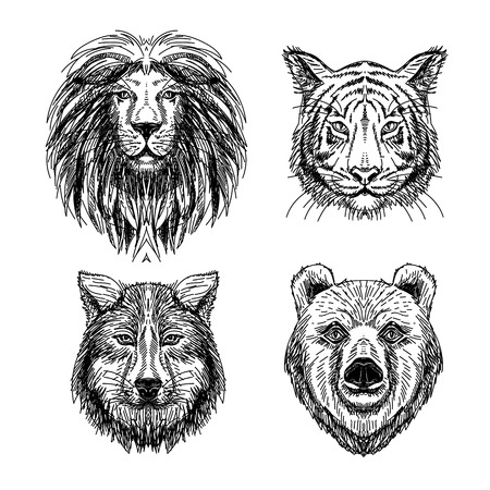 Vector set of hand drawn animal. Vintage illustration with wolf, lion, tiger and bear. Illustration
