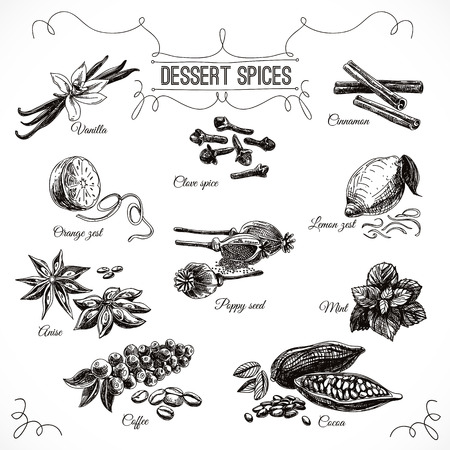 dessert: Vector hand drawn set with Dessert Spices. Vintage illustration. Retro collection with Vanilla, poppy, orange zest, lemon peel, cocoa, clove spice, anise and mint leafs.