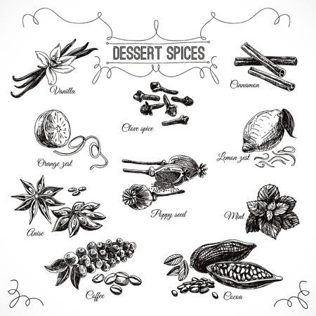 Vector hand getrokken set met Dessert Spices. Vintage illustratie. Retro collectie met vanille, papaver, sinaasappelschil, citroenschil, cacao, kruidnagel specerijen, anijs en munt bladeren.