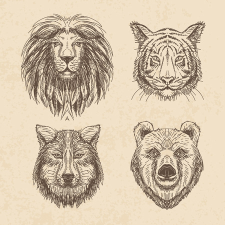 lion vector: Vector set of hand drawn animal. Vintage illustration with wolf, lion, tiger and bear. Illustration
