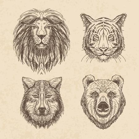 lijntekening: Vector set van de hand getekende dier. Vintage illustratie met wolf, leeuw, tijger en beer. Stock Illustratie