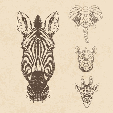 jirafa fondo blanco: Vector conjunto de dibujado a mano animal. Ilustración de la vendimia con el elefante, jirafa, rinoceronte y cebra.