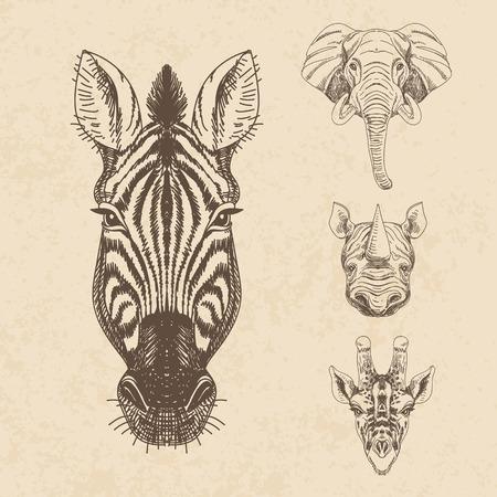 nashorn: Vektor-Satz von Hand gezeichneten Tier. Weinlese-Illustration mit Elefanten, Giraffen, Nashörner und Zebras.