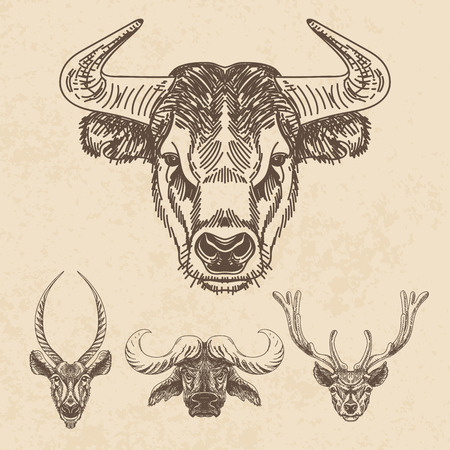 bull head: Vector set of hand drawn animal. Vintage illustration with Bulls and deer heads.