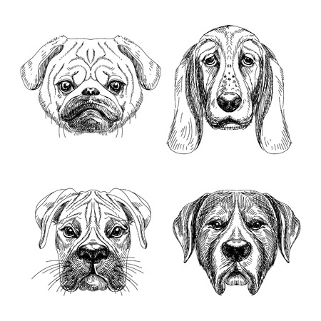 Vector hand drawn set of four dogs faces. Black and white vector sketches. Illustration