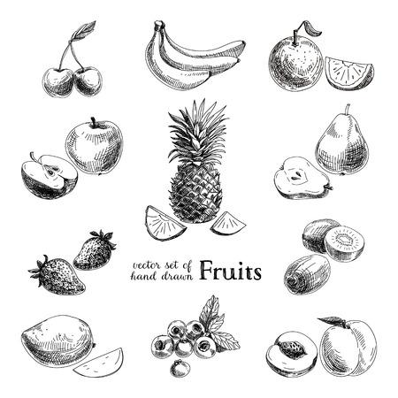 ilustracion: Conjunto de frutas y bayas cosecha dibujado a mano de vector. Retro ilustración.