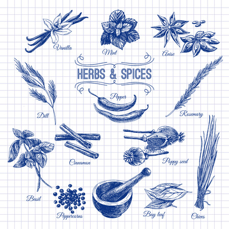 cebollines: Vector Conjunto drenado mano con Hierbas Especias. Ilustración de la vendimia. Colección retro.
