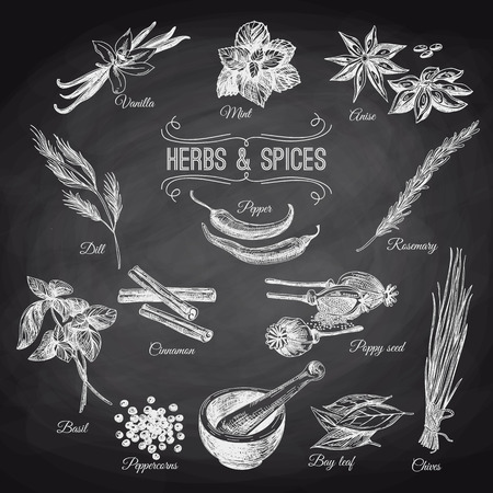 chives: Vector hand drawn set with Herbs Spices. Vintage illustration. Retro collection. Chalkboard.