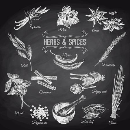 Vector hand getrokken set met Kruiden specerijen. Vintage illustratie. Retro collectie. Schoolbord.