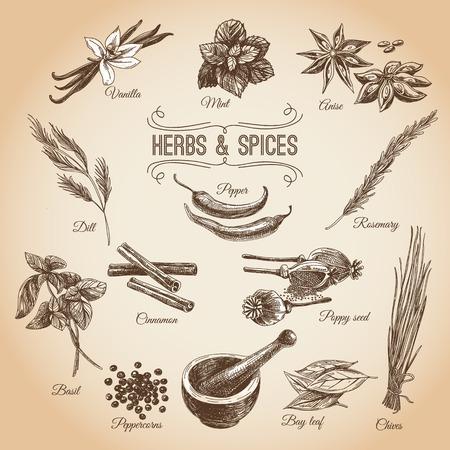 벡터 손 디저트 향료 설정 그려. 빈티지 그림. 바닐라, 양귀비, 오렌지 향, 레몬 껍질, 코코아, 정향 향신료, 아니, 민트 잎 레트로 컬렉션입니다. 일러스트
