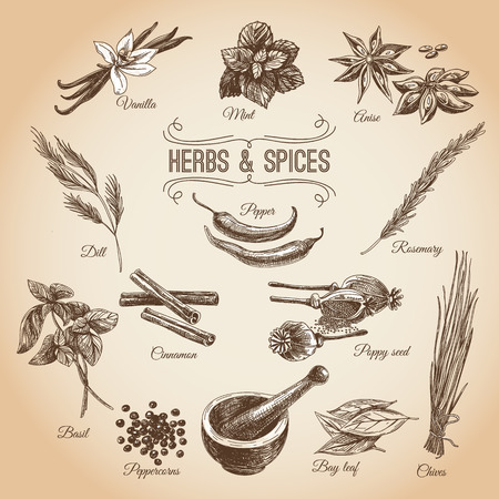 zest: Vector hand drawn set with Dessert Spices. Vintage illustration. Retro collection with Vanilla, poppy, orange zest, lemon peel, cocoa, clove spice, anise and mint leafs.