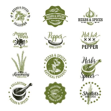 허브와 향신료 레이블, 배지 및 손으로 그린 디자인 요소의 집합입니다. 로고 컬렉션.