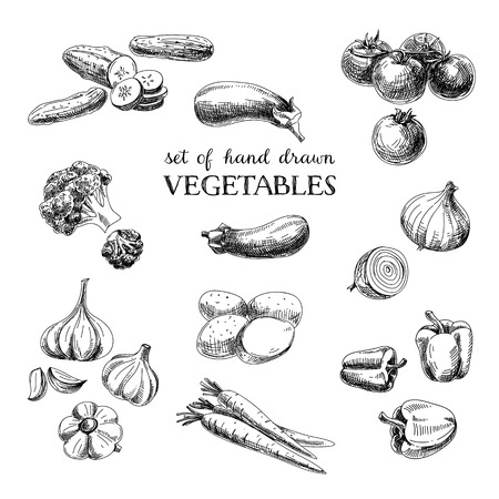 food illustrations: Vector hand drawn sketch vegetable set. Eco foods.Vector illustration. Illustration