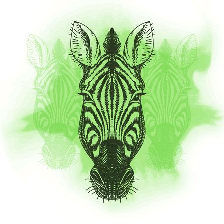 zebra heads: Vector illustration with zebra head. Hand drawn sketch.