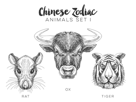 chinese astrology: Vector set of hand drawn chinese zodiac animal. Vintage illustration with zebra. ox, rat and tiger.