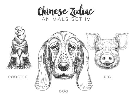 gallo: Vector conjunto de dibujado a mano animal del zodiaco chino. Ilustraci�n de la vendimia con el perro, el cerdo y el gallo.