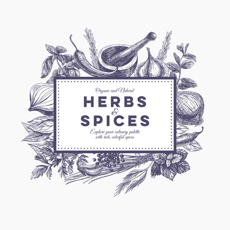 basil: Vector background with hand drawn herbs and spices. Organic and fresh spices illustration.