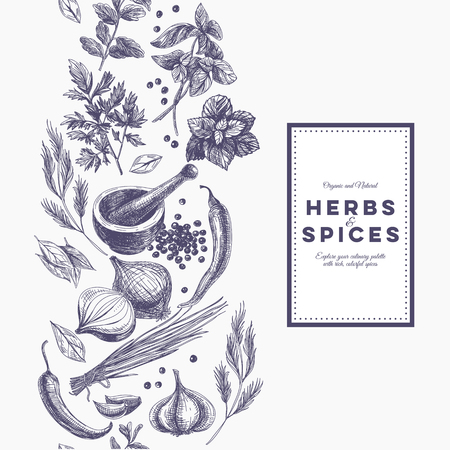 food illustration: Vector background with hand drawn herbs and spices. Organic and fresh spices illustration.