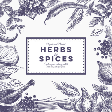 Vector background with hand drawn herbs and spices. Organic and fresh spices illustration.