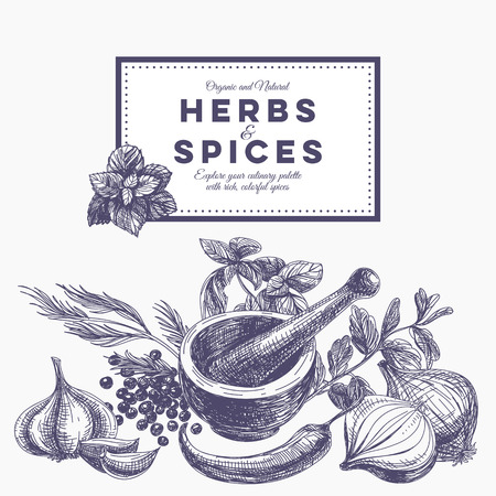 indian spices: Vector background with hand drawn herbs and spices. Organic and fresh spices illustration.