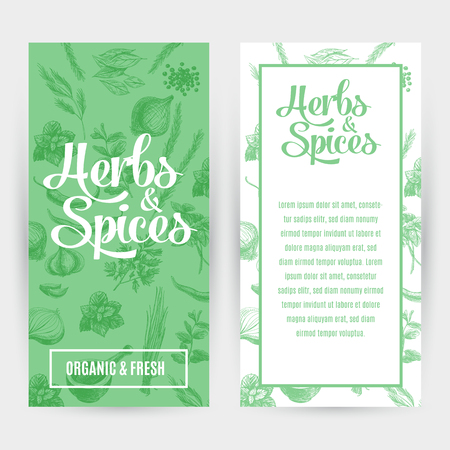 especias: Banderas del vector fijadas con hierbas y especias dibujado a mano. Orgánica y especias frescas ilustración.