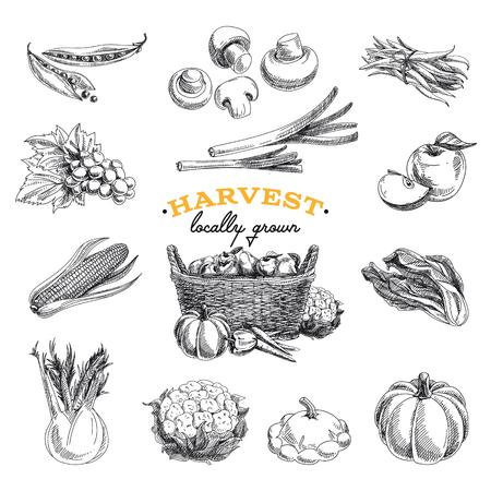 canastas con frutas: vector dibujado a mano conjunto de cosecha de dibujo. foods.Vector eco en la ilustración.