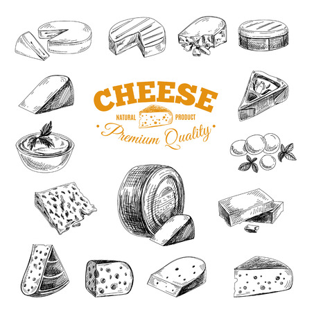 cheddar cheese: Vector hand drawn illustration with cheeses . Sketch.