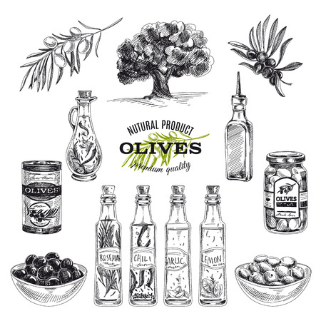 boceto: vector dibujado a mano ilustración con aceitunas y aceite de oliva. Bosquejo.