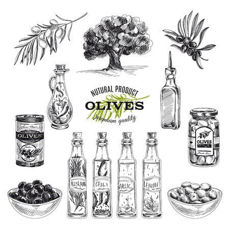 Vector hand drawn illustration avec des olives et de l'huile d'olive. Esquisser. Illustration