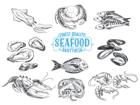Vector hand drawn illustration with seafood. Sketch. Stok Fotoğraf - 49810249