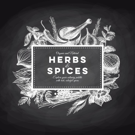dill: Vector background with hand drawn herbs and spices. Organic and fresh spices illustration. Chalkboard.