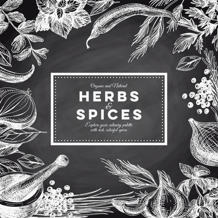 Vector background with hand drawn herbs and spices. Organic and fresh spices illustration. Chalkboard.