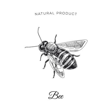 Ilustración de abeja de miel dibujado a mano Ilustración. Estilo del vintage del bosquejo. Plantilla de diseño. Fondo retro.