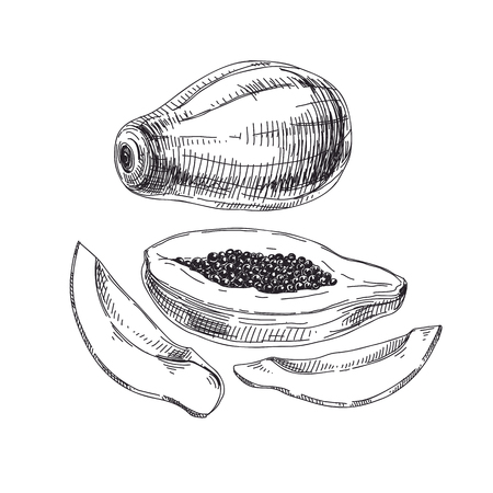 Beautiful vector exotic fruit hand drawn  Illustrations. Detailed retro style papaya image.